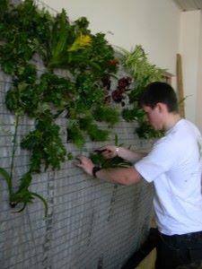 chep mise en place des végétaux