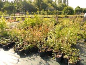 chep arbustes