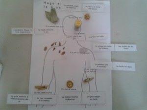 chep plantes medicinales