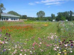Prairies fleuries 055