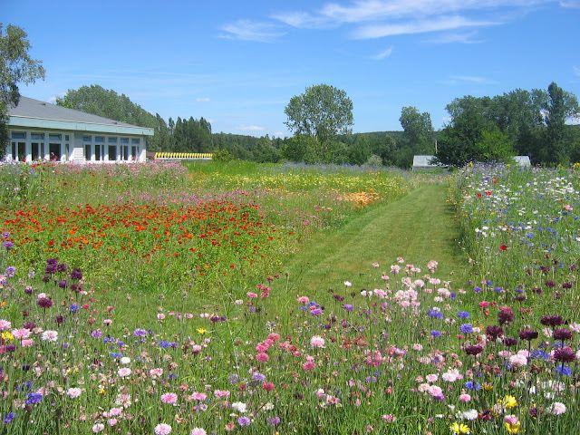 planter une prairie fleurie