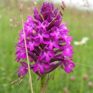 chep orchidee 3