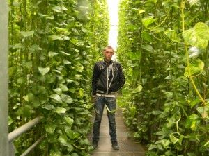 chep murs vegetaux