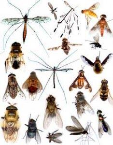 chep insectes