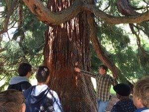 chep sequoia