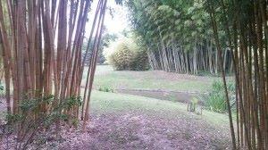 chep bambouseraie