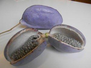 chep fruit violet