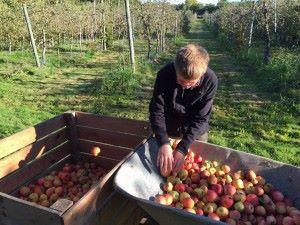 chep tri pommes