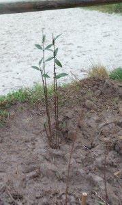 chep plant