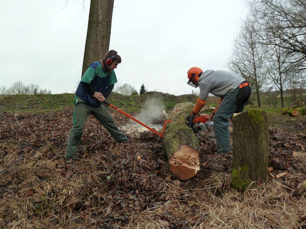 BPA Option Travaux forestiers, spécialité bûcheronnage