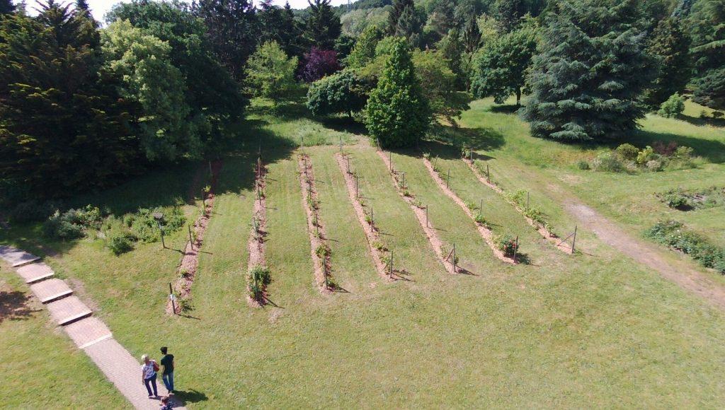 vue aérienne des vignes
