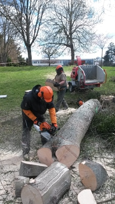 Chantier bûcheronnage par la classe de BPA Travaux forestiers en formation continue