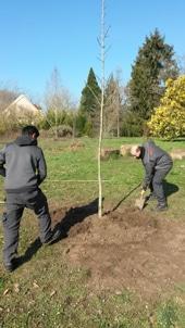 plantation arboretum de feuillus