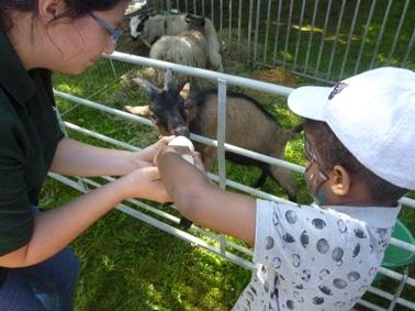 Donner le biberon aux animaux