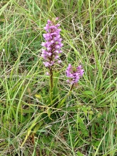 Identification de la flore sauvage pour les BTS GPN2