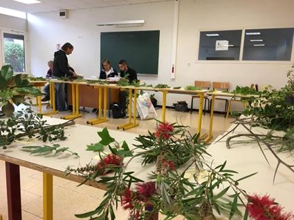 concours en reconnaissance de végétaux, sélections régionales  2019