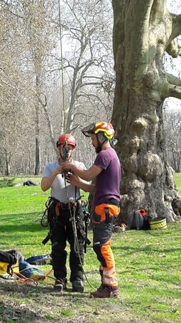 Formation CS arboriste grimpeur