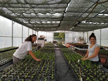 Travaux à la serre, CAPA Métiers de l'agriculture, Option : Production horticole