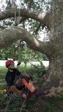 Certificat de spécialisation Arboriste-Elagueur