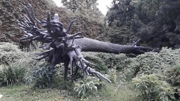 Visite des Tuileries par les Bac pro Forêt et Aménagement paysager