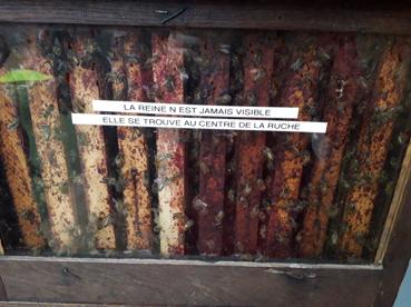 CAPa Maraîchage et BP Travaux Paysagers Option : bûcheronnage, visite Poullain