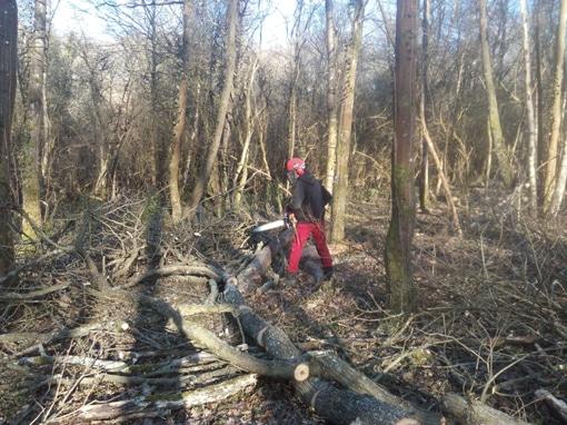 Chantier Forêt pour les secondes et terminales Bac Pro Forêt