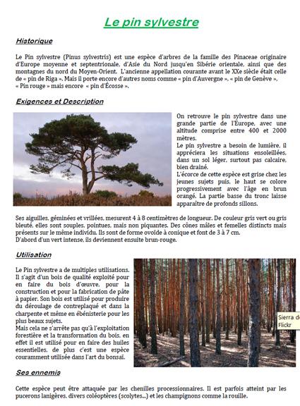 filière Bac Pro Forêt