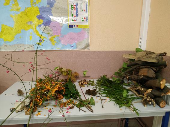 La classe de 4e-3e s'initie au Land art