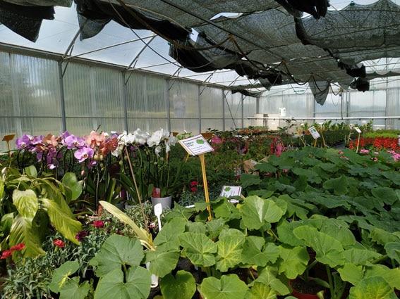 Ventes de végétaux le 29 mai et 5 juin 2021